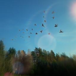 birds edit blureffet beauty freetoedit