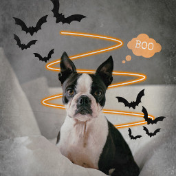 freetoedit halloween halloweenparty boo dog
