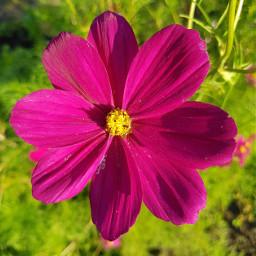 freetoedit flower blossom macro macrophotography pclookdown