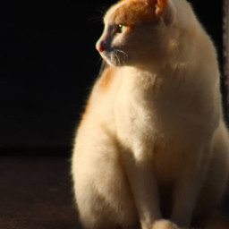 freetoedit catsofpicsart cats feline onmystreet