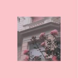 freetoedit aesthetics tumblr background rose