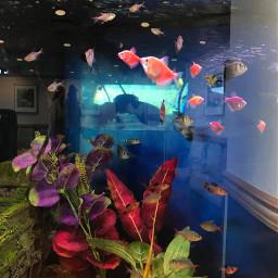 freetoedit aquarium noedits nofilters beautiful
