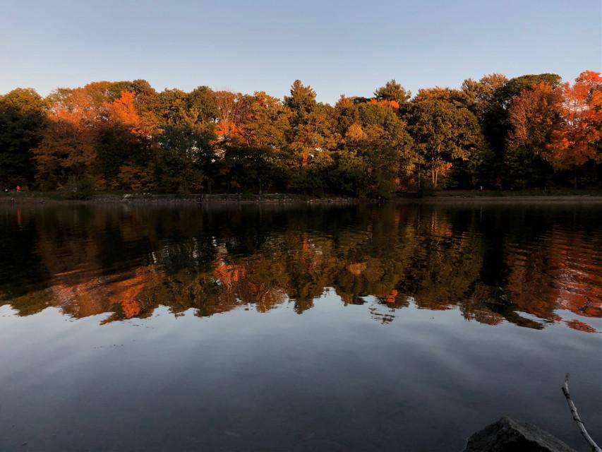 #freetoedit #reflection #fall #autumn #pond #goldenhour #symmetry