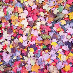 fallingleaves fallcolors