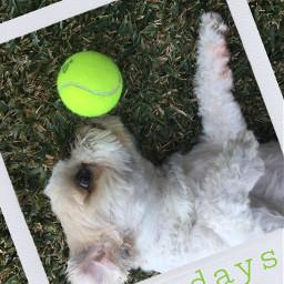 freetoedit dogsofpicsart doglover dogdays dogday