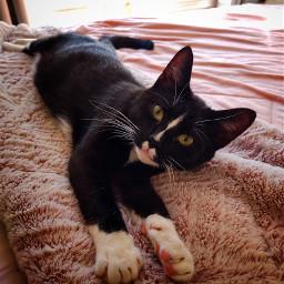 catsofpicsart catsphotography cat relax catnap