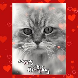 happybirthday cats freetoedit