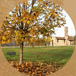 ancient tree myphoto autunno landscape