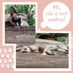 cat mycate loveyou beutiful❤ freetoedit