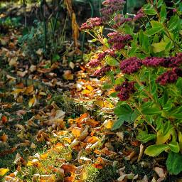 autumnvibes autumn lovely flowers nature freetoedit