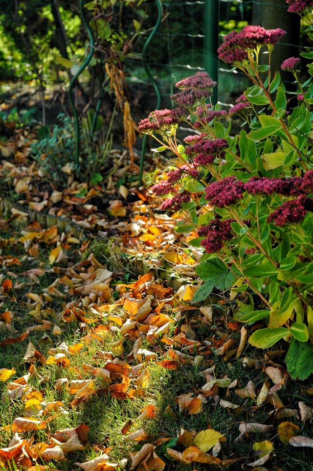 #autumnvibes #autumn #lovely #flowers #nature #naturelover 🌹🌼   #freetoedit