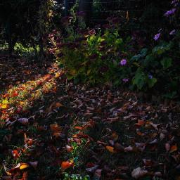 naturesbeauty autumn naturelover beautiful picsart freetoedit