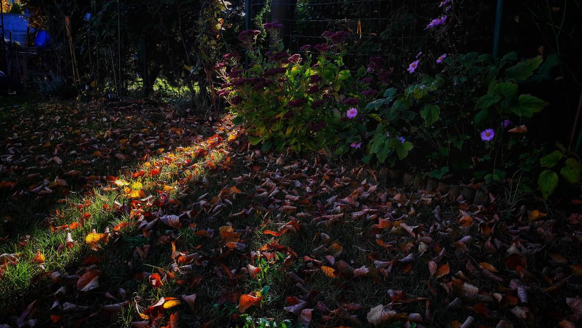 #naturesbeauty #autumn #naturelover #beautiful #picsart #autumnvibes 🍃🍁   #freetoedit