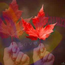 freetoedit autumn love colorful leafs ircfallmood