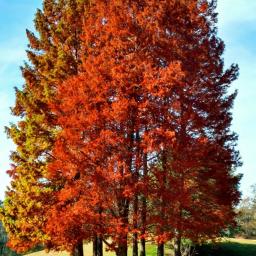 freetoedit fall autumn fallvibes fallcolors