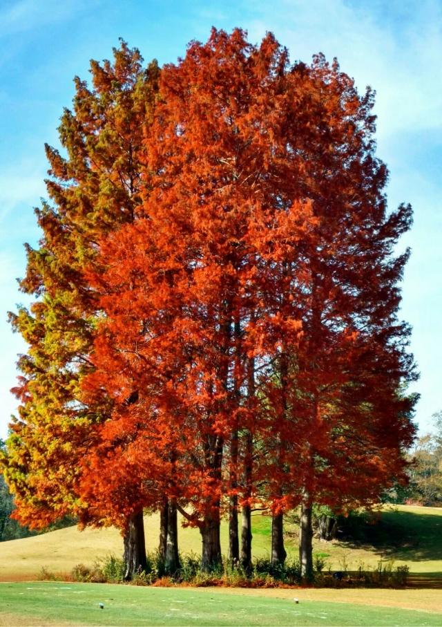 Fall Colors - #freetoedit #fall #autumn #fallvibes #fallcolors #colorful #trees #october #octobervibes #outdoors #nature #naturelover