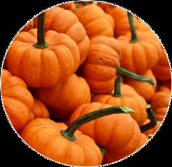 halloween backgrounds freetoedit