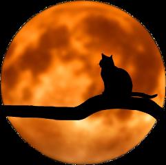 freetoedit moon cat petsandanimals silhouette