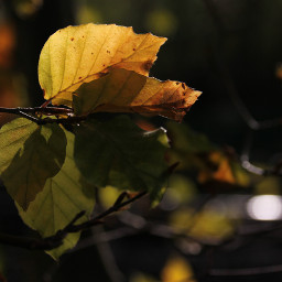 autumnleaves autumnvibes fall moody moods freetoedit