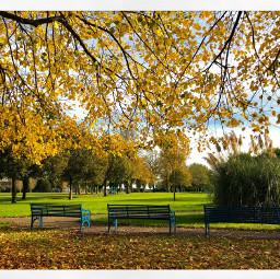 freetoedit autumn leave photography