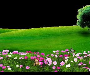 green garden pinkrose freetoedit
