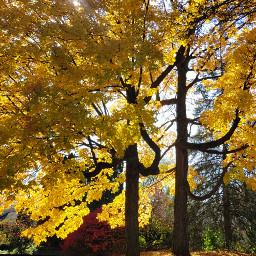 trees background fall remixme freetoedit
