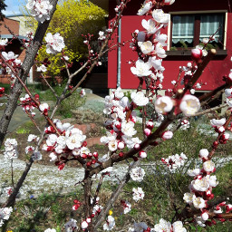 freetoedit background hintergrund garten garden ccc
