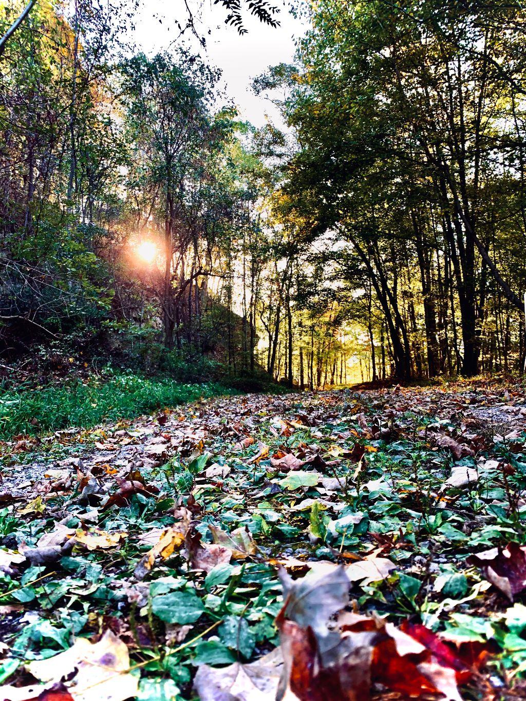 #interesting #fall#fallingleaves #nature #photography
