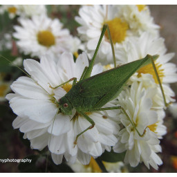 freetoedit followme follow4like insect insect_perfection