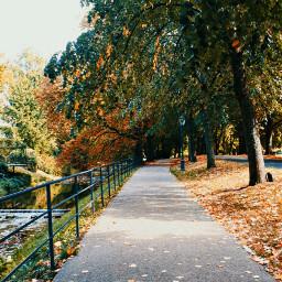 freetoedit autumn autumnvibes autumnleaves mood