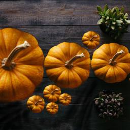 freetoedit hollandroden ircpumpkin pumpkin