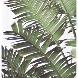 nature leafs giantleafs strelitzia giantstrelitzia freetoedit