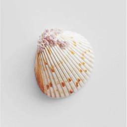 minimalism nature seatreasures naturesbeauty seashell freetoedit