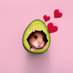 freetoedit hamster