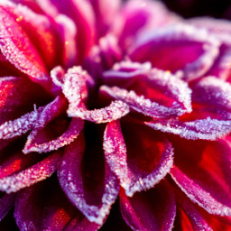 photography photooftheday frost flower flowers freetoedit