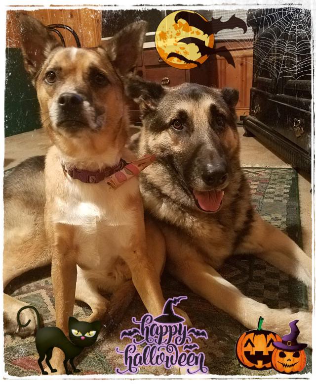 Happy Halloween from Axel and Zoey! #Halloween #dogs #dog #puppy #happyhalloween #freetoedit