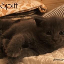 kittens siblings cute bluegray mycats