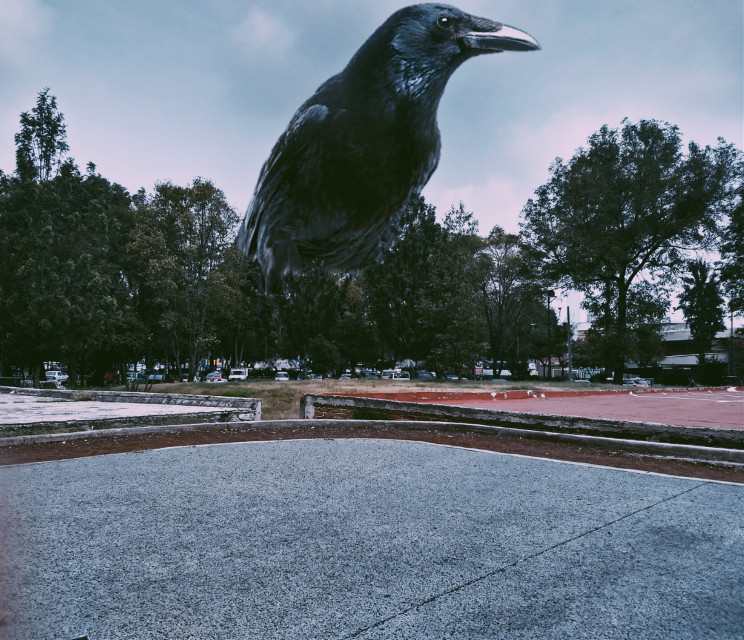 #crows #city #abstract #dDM