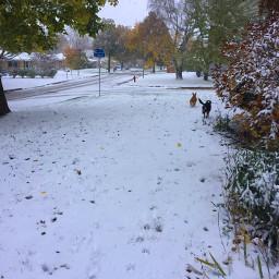freetoedit snow happyhalloween photography cold