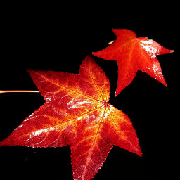 freetoedit red myphotography leafs minimalism