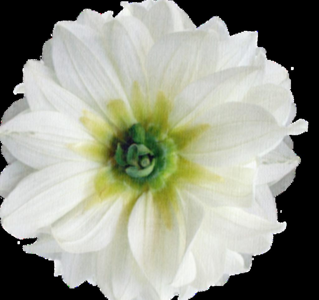 #flowers#
