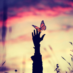 freetoedit silhouette hand butterfly sunset madewithpicsart picsarteffects art artwork becreative creative creativity myedit remixit