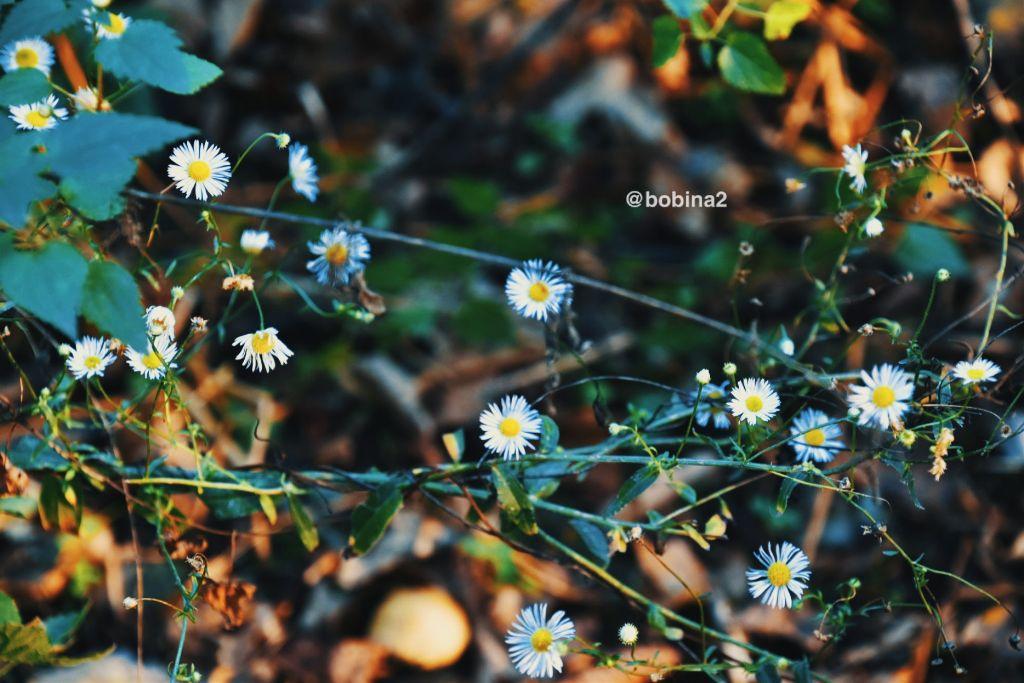#freetoedit #photography #nature #wildflowers