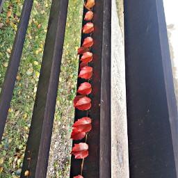 freetoedit bunia0914 myphoto leaf leafs
