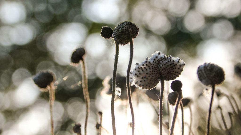 #freetoedit #bokeh #background #flowers #photography #nature #naturephotography #myclick #moody #blackandwhite #intothesun #simple
