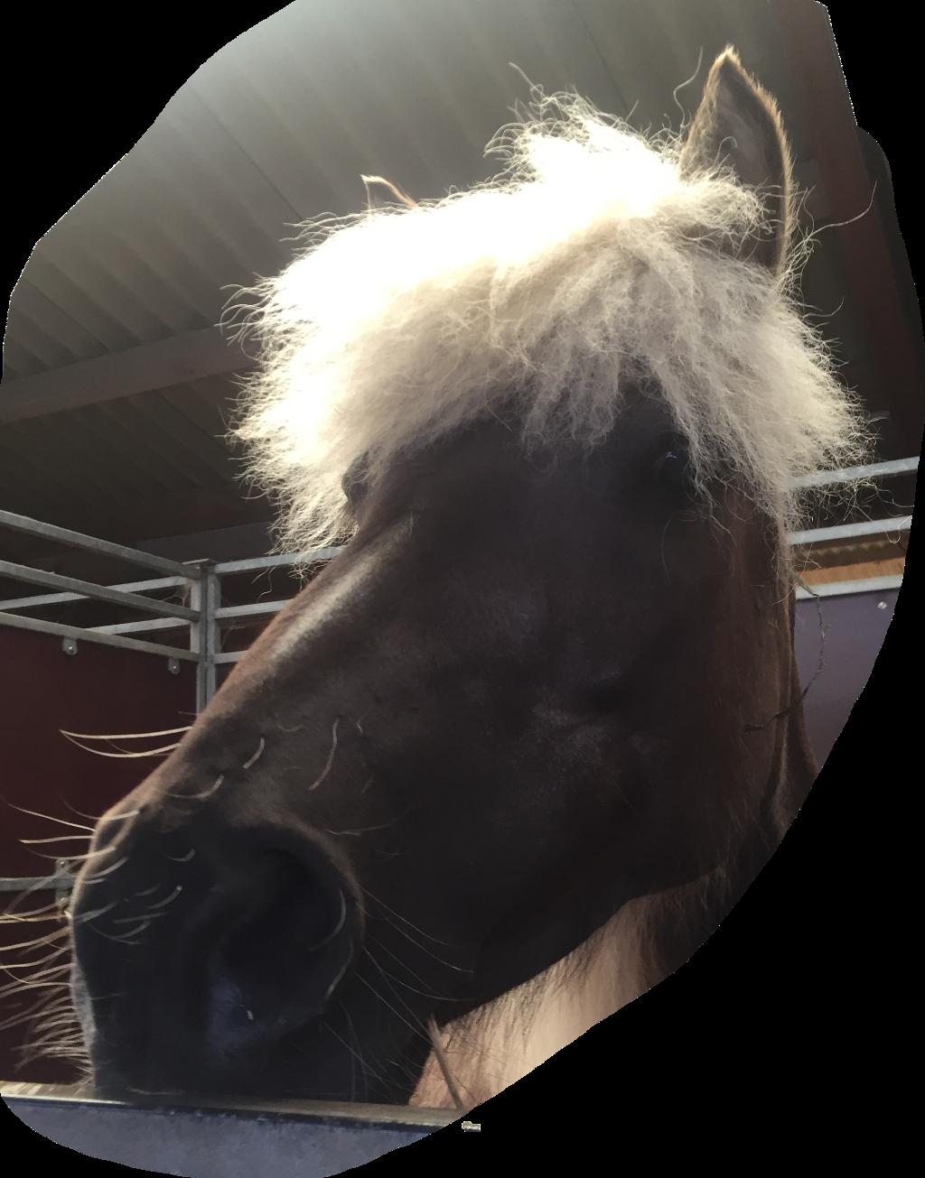 #horse #hest #freetoedit