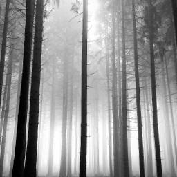 freetoedit blackandwhite tree nature fog