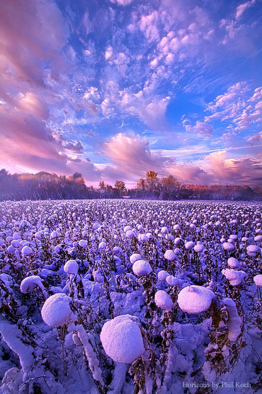 """ Snow Flowers "" - Wisconsin Horizons by Phil Koch. #landscapephotography  #freetoedit #remixit #clouds #naturephotography #peace #beauty #beautiful #pretty #life #winter #snow #purple #earth #peaceful #sunrise #sunset #autumn #nature"