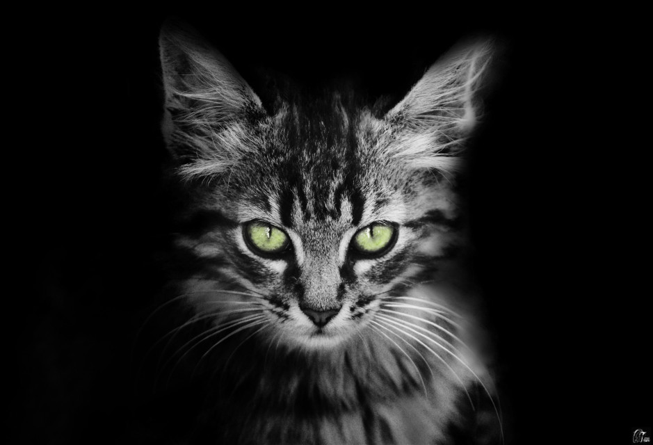 #cat #blackonblack #freetoedit