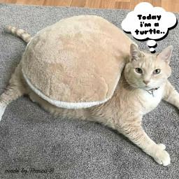 cat turtle lol freetoedit